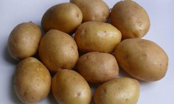 Картофель Розара: описание сорта, полноценный уход от посадки до сбора урожая 13